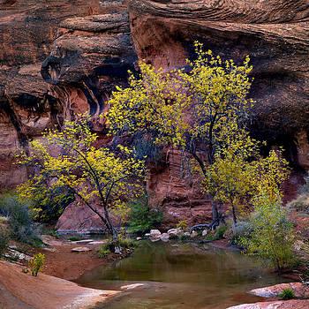 Sacred Tree by Jim Speth