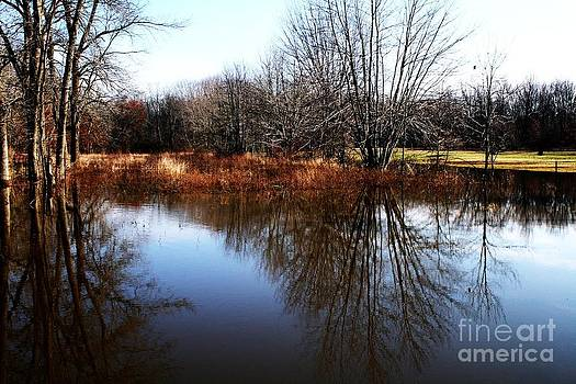 Reflections by Christina A Pacillo