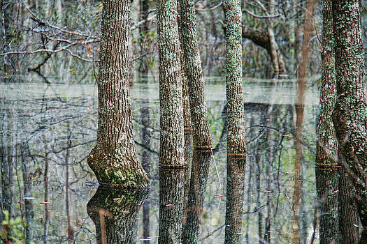 Reflections of the Swamp by Mary Hershberger