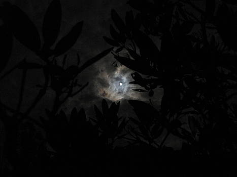 Rhododendron Moonlight by Shane Brumfield