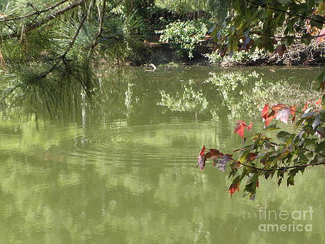Ripples on the pond by Cindy Hudson
