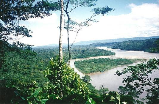 River in the Amazon Rainforest by Anna Tetro