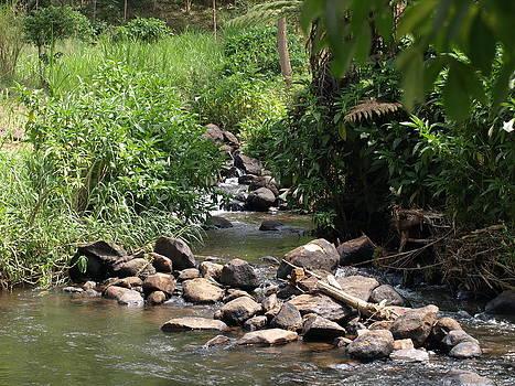 River Rocks by Carol Evans