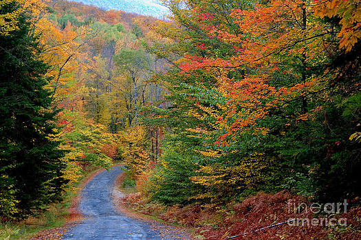 Larry Landolfi and Photo Researchers - Road Through Autumn Woods