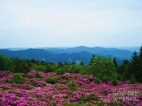 Roan Mountain by Crystal Joy Photography