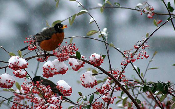 Robin 3 by Wendy Emel