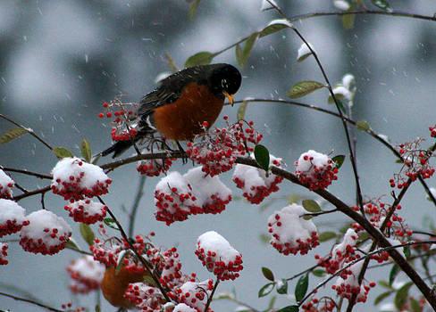 Robin 4 by Wendy Emel