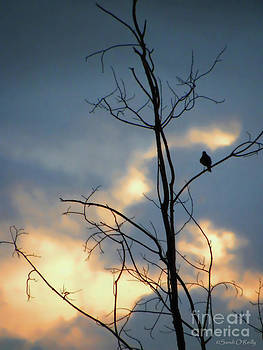 Sandi OReilly - Robin Watching Sunset After The Storm