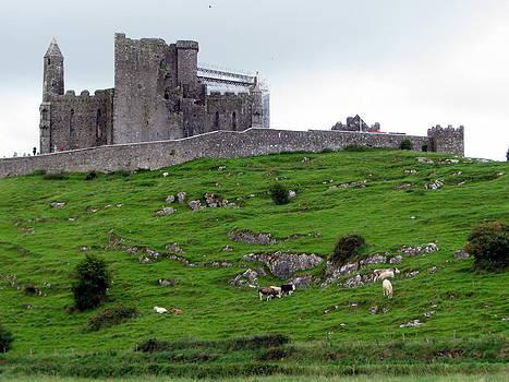 Rock of Cashel by Sheila Rodgers