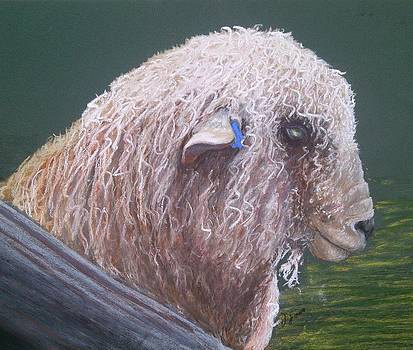 Romney Ram by Jan Lowe