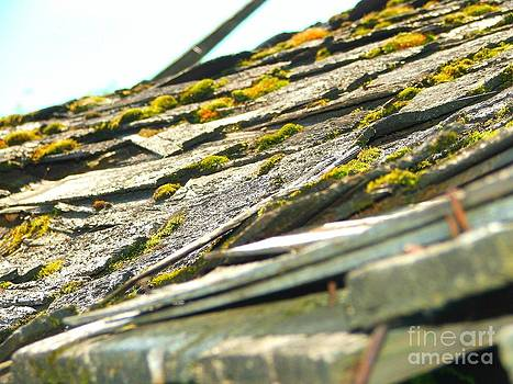 Roof with Growth by Ashley Vipond