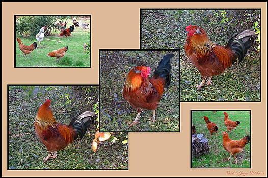 Joyce Dickens - Rooster Red