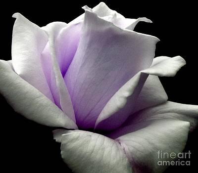 Rose by Charleen Treasures