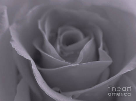 Juergen Roth - Rose in Black and White