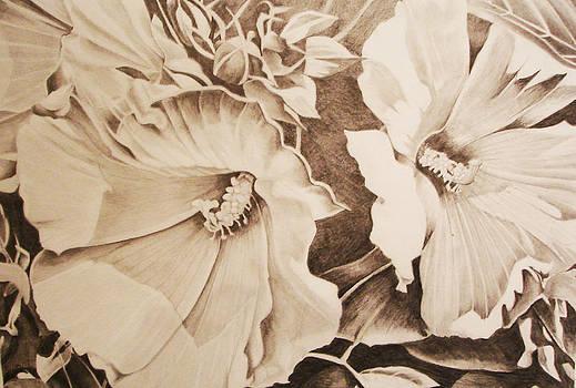 Rose of Sharon by Yvonne Scott