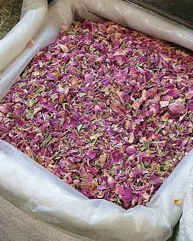 Rose Petals by Tia Anderson-Esguerra
