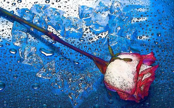 Rose by Viveka Singh