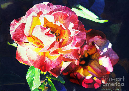David Lloyd Glover - Roses