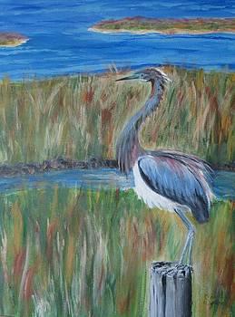 Ruffled Blue Heron by Carolyn Speer