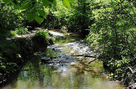 Running Water by Leslie Ann Hammer