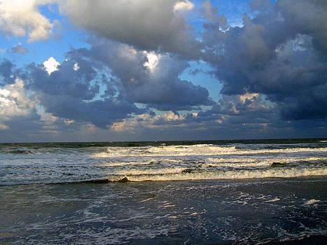 Patricia Taylor - Rushing to Shore