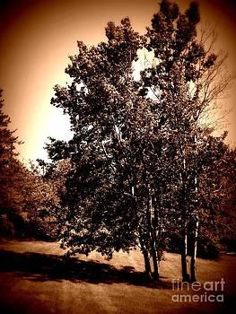 Rustic Tree by Ashley Vipond