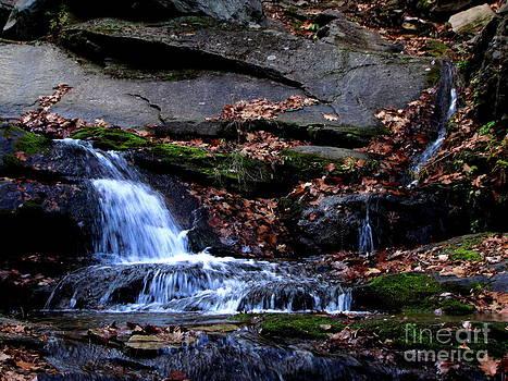 Rustling Waterfall by Tom Carriker