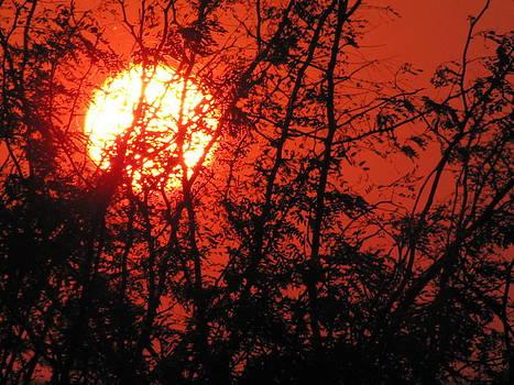 Safari Sunrise by Shawn Hughes