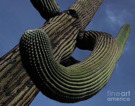 Saguaro1 by Jim Wright