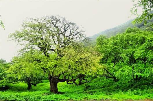 Salalah Green by Balram Panikkaserry