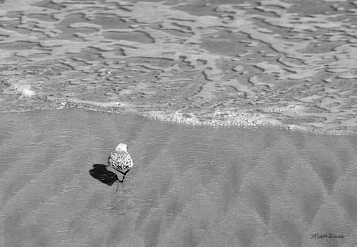 Michelle Wiarda - Sandpiper Testing the Waters