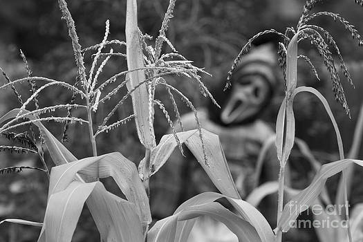James BO  Insogna - Scarecrow in the Corn BW