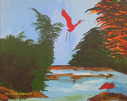 Scarlet Ibis by Juliet Nidhan