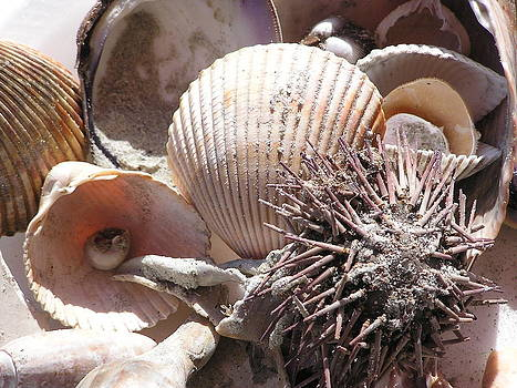 Sea Cornucopia by Diane Frick