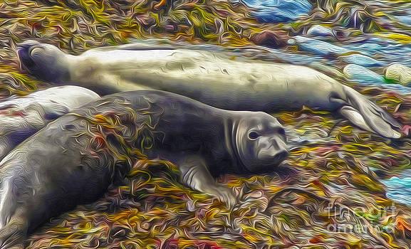 Gregory Dyer - Sea Lions in San Simeon - 01