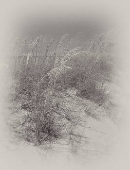 Sea Oats by James Corley