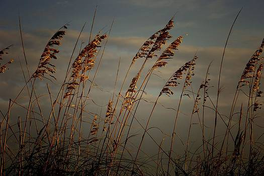 Sea Oats by Joetta West