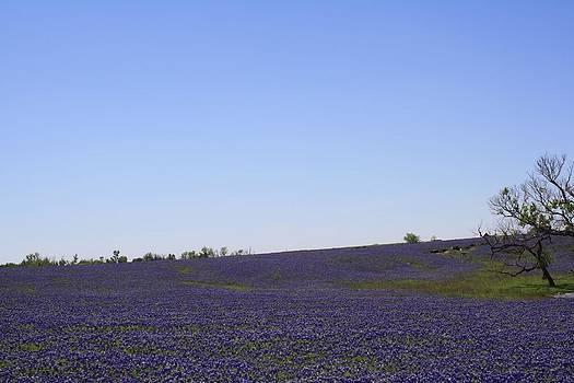 Lynnette Johns - Sea of Blue