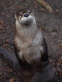 Debi Ling - Sea Otter
