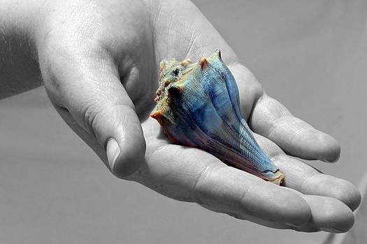 Sea shell by Ruben  Flanagan