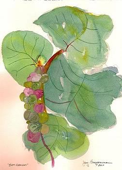 SeaGrapes by Joy Braverman