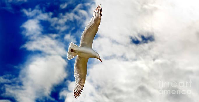 Simon Bratt Photography LRPS - Seagul gliding in flight