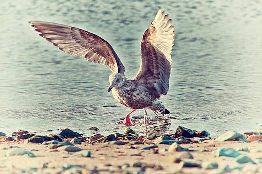 Karol  Livote - Seagull Flaps
