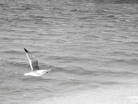 Seagull Over Water by Floyd Smith