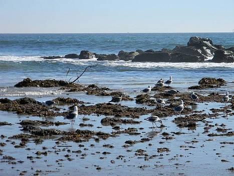 Seagulls at Venice Beach by Eric Barich