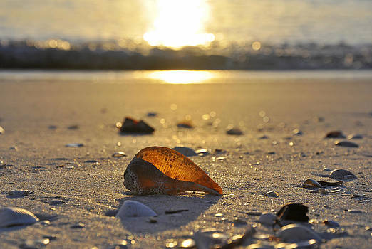 Seashells and Sunshine by Christine Stonebridge