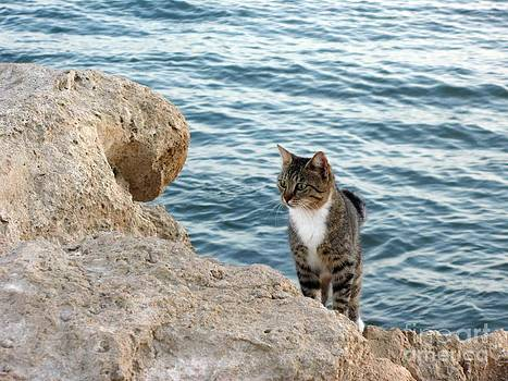 John Chatterley - Seashore Cat