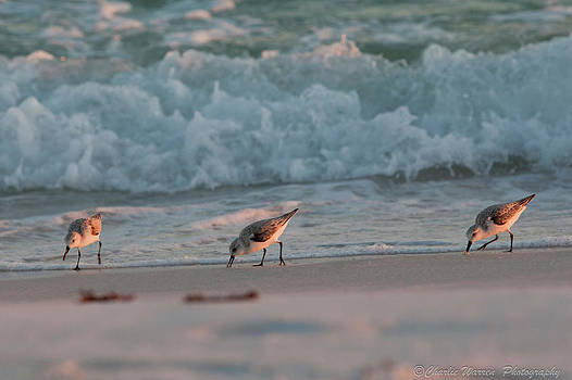 Seaside Trio by Charles Warren
