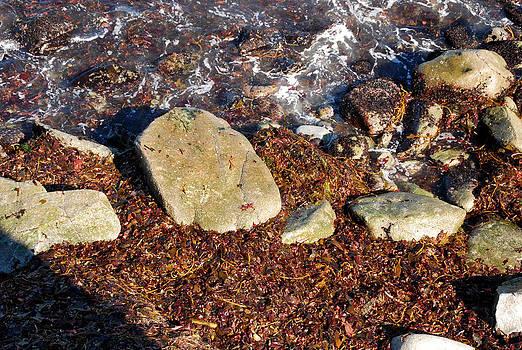 Seaweed By The Shore by Kenji Lauren Tanner