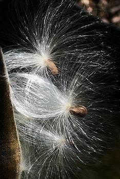 Seed Dancers by Wide Awake Arts